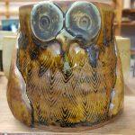 Rachel's owl